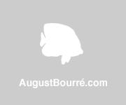 AugustBourre.com