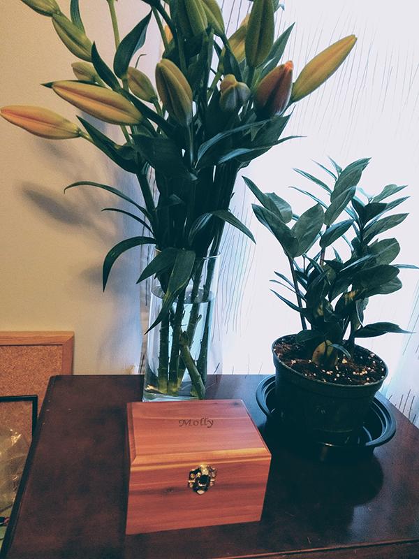 Molly's ashes in the little cedar box.