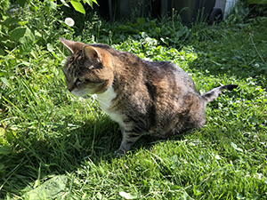 Molly on the front lawn.