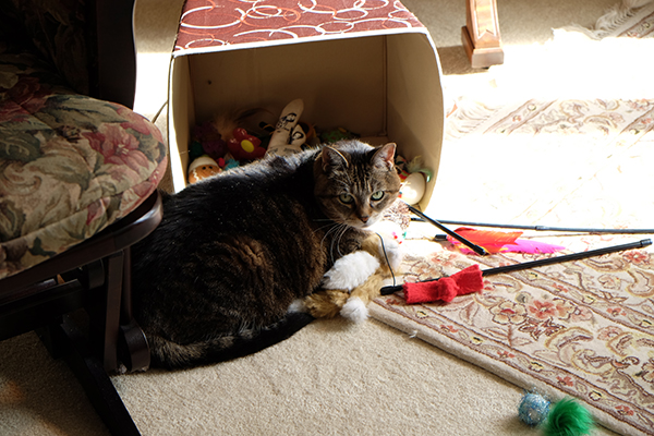 Molly amongst her toys.