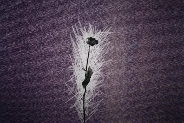 Static Rose